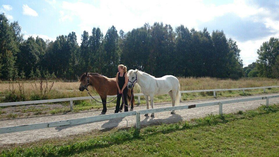 Mellan tävlingsgrenarna hängde vi runt och tog lite promenader med våra små tanter till hästar.